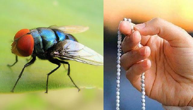Dengan Perantara Seekor Lalat, Allah Masukkan Ia ke Surga! Inilah Kisahnya !!