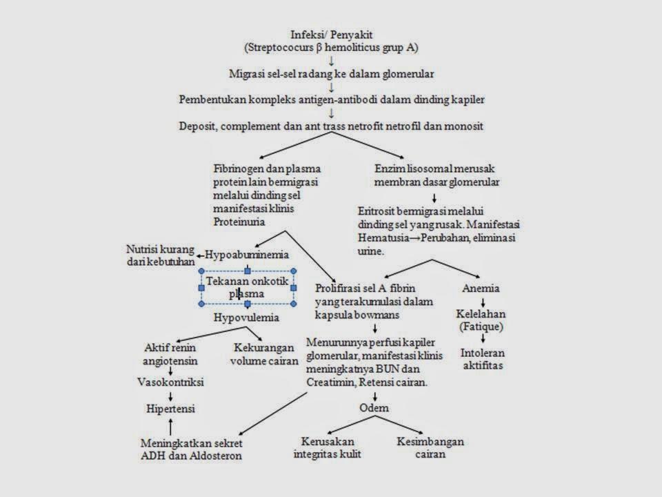 PATOFISIOLOGI GLOMERULONEFRITIS PDF