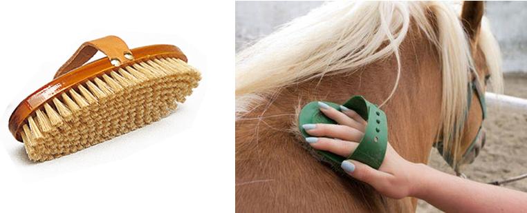 bruza cepillo caballo apellido bruzual bruzualizar animales cepillar caballos
