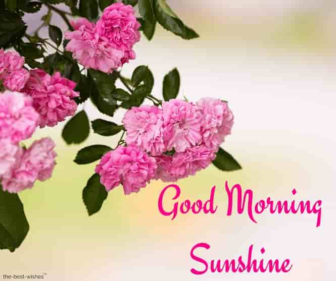 good morning sunshine flowers images