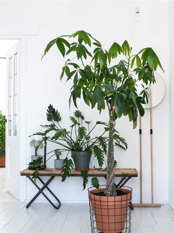 decorar con plantas chicanddeco