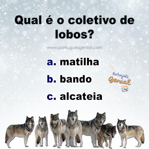 Coletivo de lobos - Qual é o coletivo de lobos?