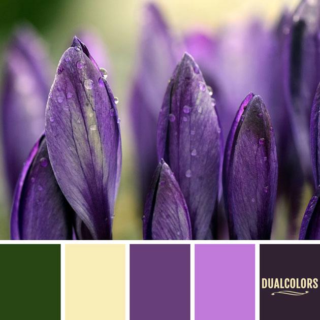 color_paleta_113