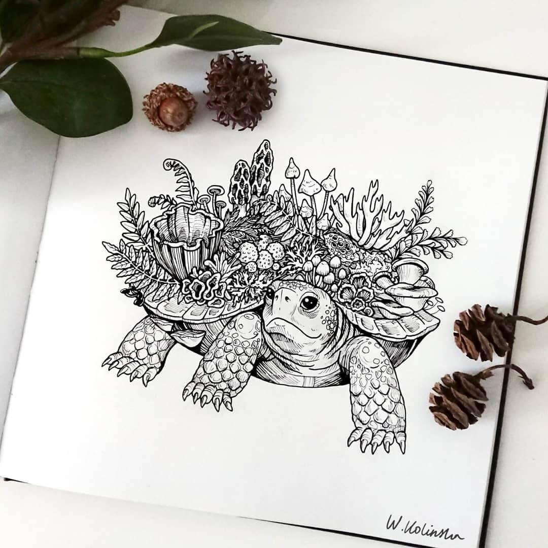 06-Forest-tortoise-Weronika-Kolinska-Black-and-White-Animal-Ink-Drawings-www-designstack-co