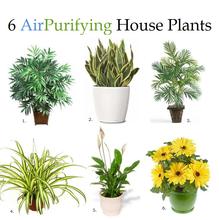 Breathe Better: 6 House Plants To Improve Air Quality • CAC