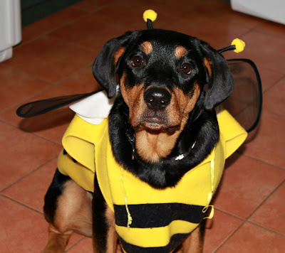 bumblebee dog costume - turtlesandtails.blogspot.com