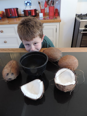 coconuts from coconut shy at village fair