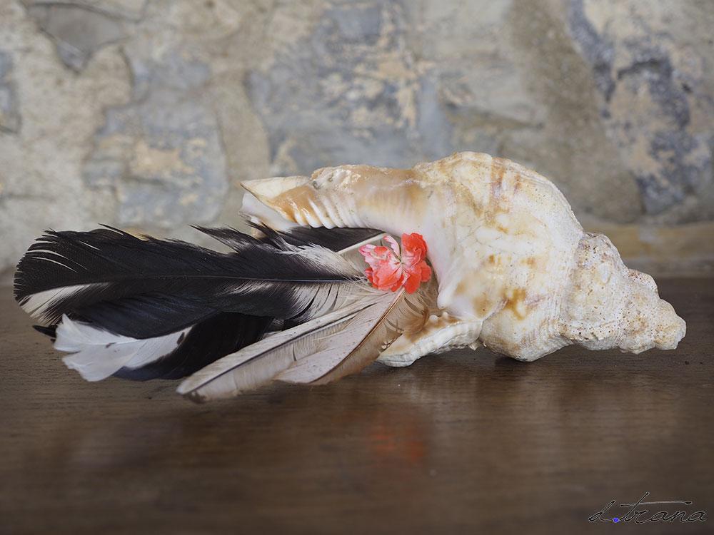 Composición; caracola antigua con plumas y flor de geranio