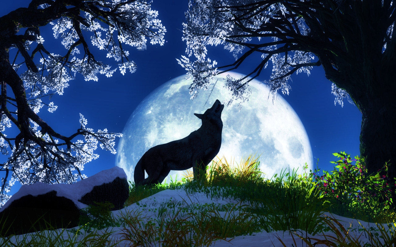 WALLPAPERS WORLD: Best Animal Wallpapers