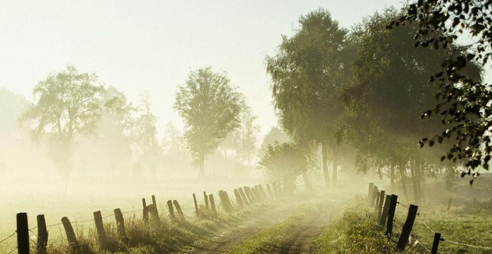 Niebla y condensacion