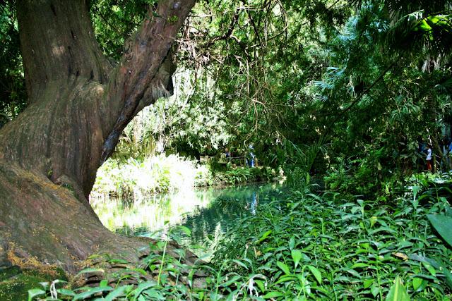 lago, acqua, albero, vegetazione