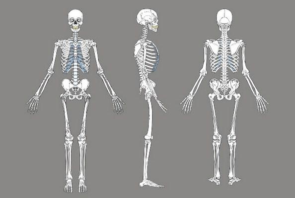 Jumlah Tulang Manusia Berkurang Ketika Dewasa?