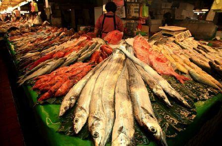 Manfaat Rajin Makan Ikan Bagi Kesehatan Tubuh