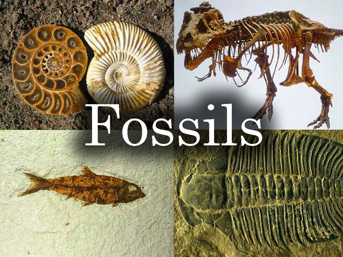 Science Online The Types Of The Fossils And The Ways Of