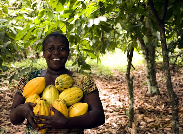 5 Importance Of Agribusinesses In Africa