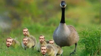 Type Ryan Gosling jadi Ryan Gooseling