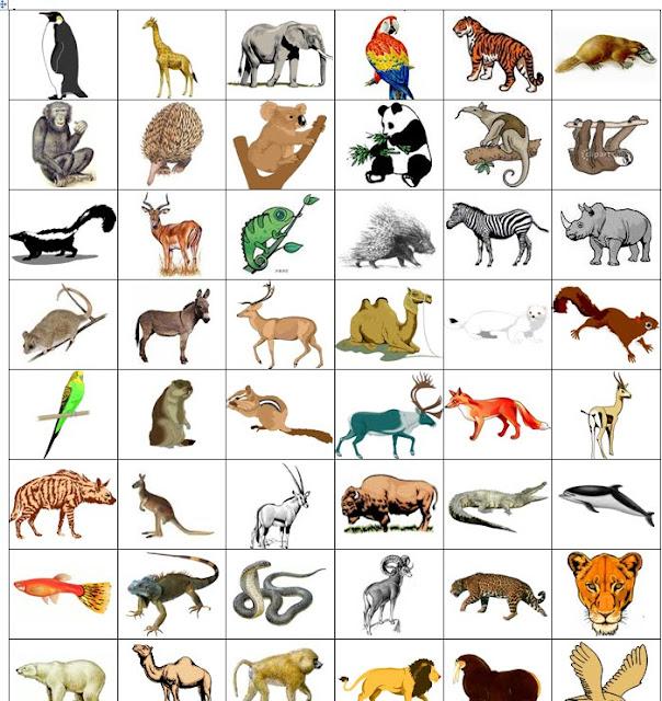 скачать карточки с животными
