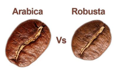 biji kopi arabika dan robusta