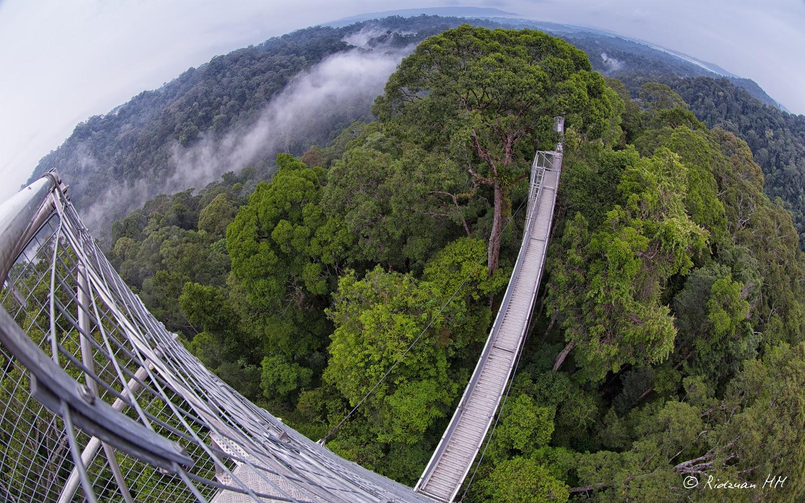 ulu temburong national park taman nasional ini terletak di antara sungai dan belalong tempat memiliki luas sekitar 50 000 hektar