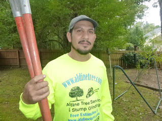Delfino Sanchez wearing yellow shirt reading aldine tree services houston stump grinding www.aldinetree.com