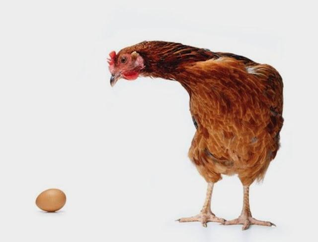Semua Tentang Telur Ayam