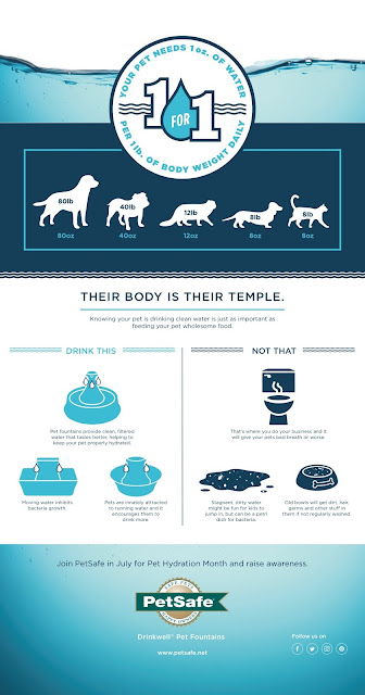 PetSafe® Brand Pet Hydration Month Infographich