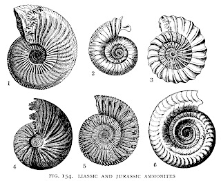 Antique Illustration Ocean Seashell Collage Sheet Background Download