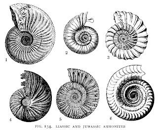 seashells ocean images illustrations collage sheet clip art digital