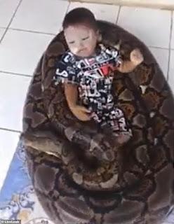 ular sanca