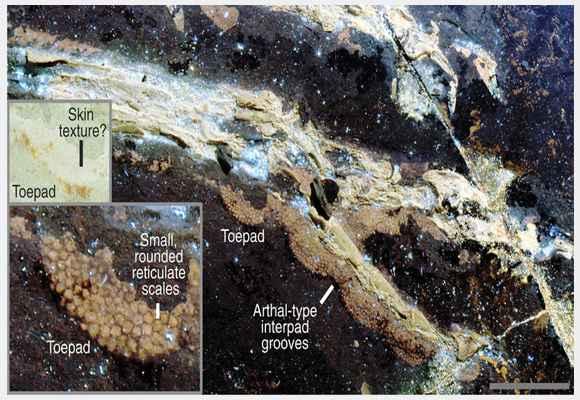 tekstur kulit burung dinosaurus