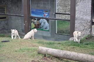http://homestaykotabatumalang.blogspot.com/2014/03/jatim-park-2-di-homestay-kota-batu.html