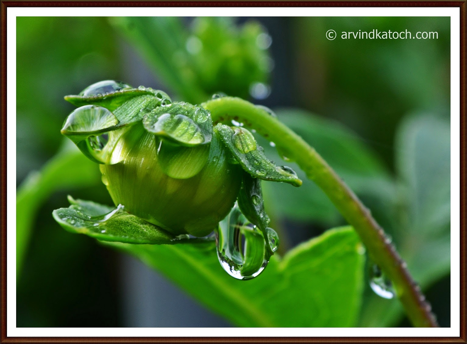 Rain Drops, Beauty, Rain Drop Picture,