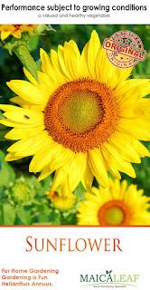 benih-bunga-matahari.jpg