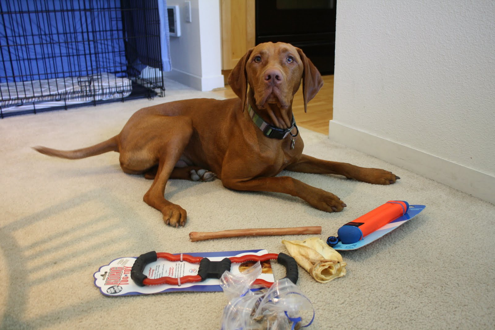 Weve Gotten A Bunch Of Questions About Gear We Use So Heres Post On Our Favorite Products Course These Arent Vizsla Specific Most Items