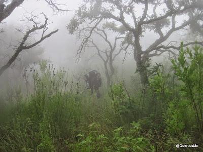 Neblina en el Cerro García