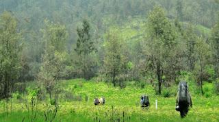Jalur Pendakian Gunung di Jawa Terpanjang