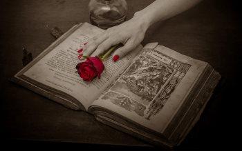 Wallpaper: Antique Book Red Rose