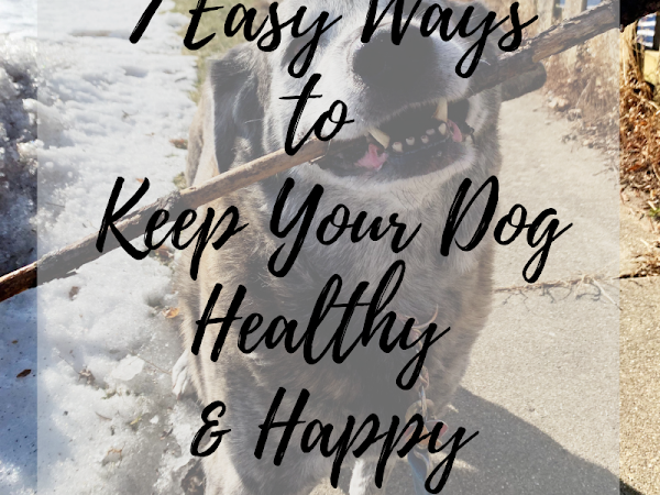 7 Easy Ways to Keep Your Dog Healthy & Happy