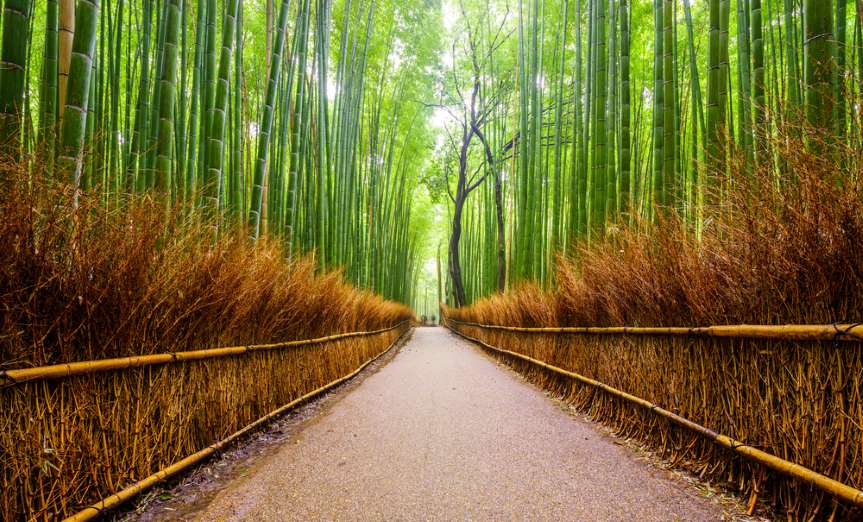 bamboo forest 3d wallpaper
