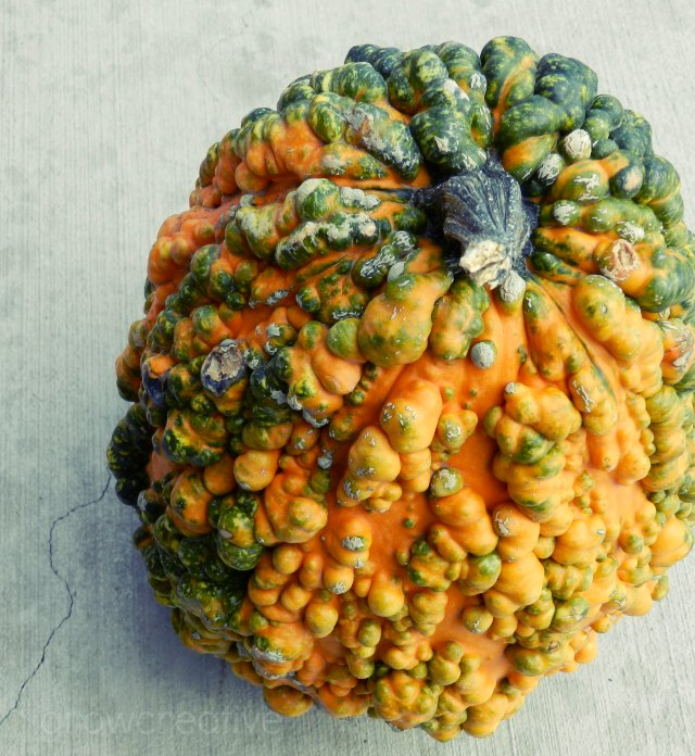 orange and green warty decorative gourd