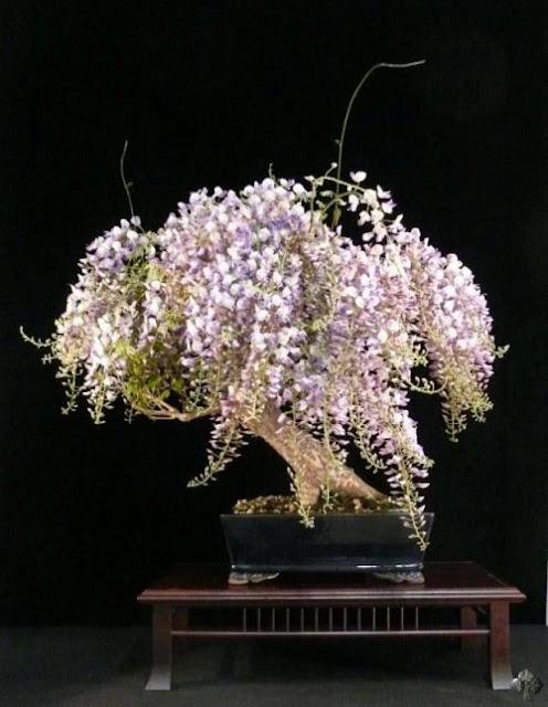 A magnifica arte do Bonsai