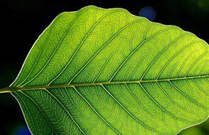 http://agriculturers.com/la-increible-inteligencia-de-las-plantas/