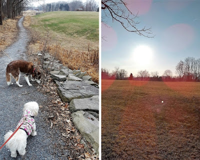 Dog friendly park in the town of Rhinebeck, New York  Pet friendly, Dog friendly parks in upstate NY