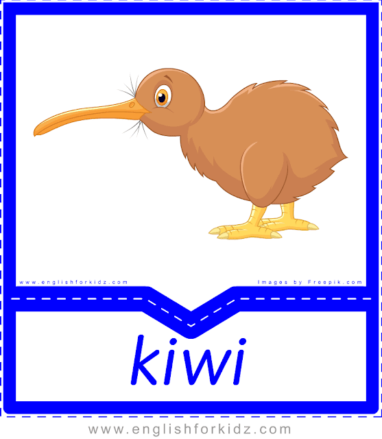 Kiwi - printable Australian animals flashcards for English learners