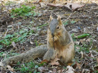 a squirrel eating a maple seed