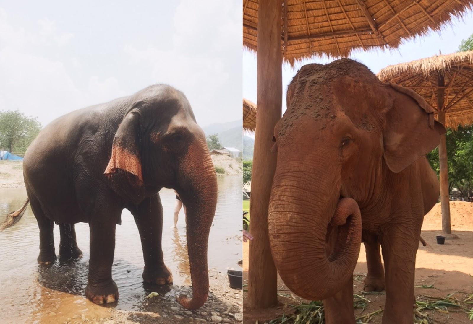 elephant-nature-park-conservatory-rescue-thailand