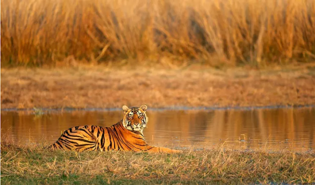 Top 5 Wildlife Parks of Rajasthan Tourism