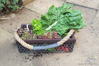 http://acraftymix.com/blog/2016/03/07/easy-diy-harvesting-basket/