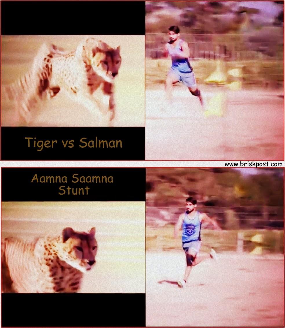 Salman running to be in front of a tiger during Darr Ka Blockbuster Khatron Ke Khiladi stunt