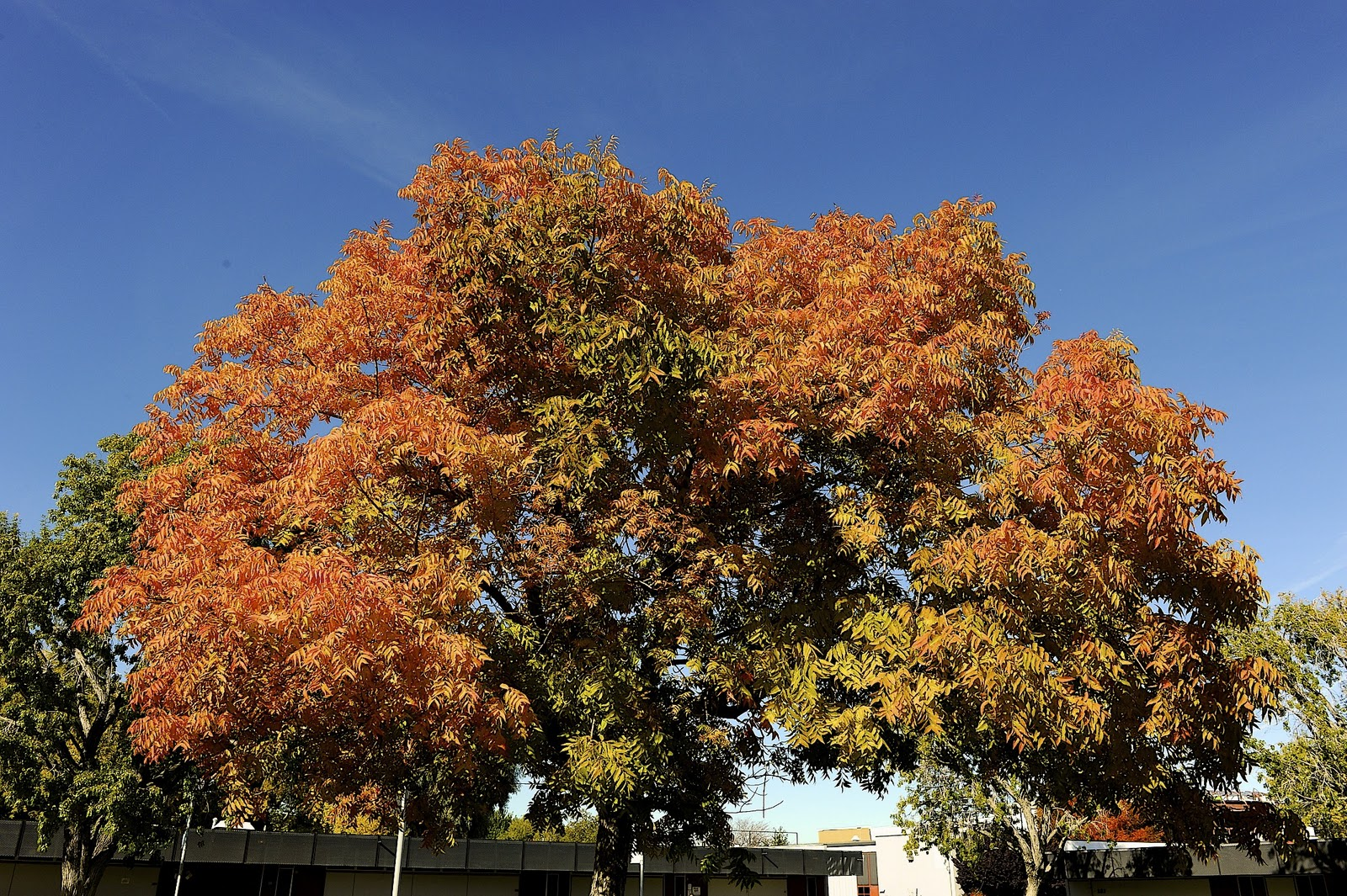 Antelope Valley College Blog Why Do Trees Turn Red In Fall